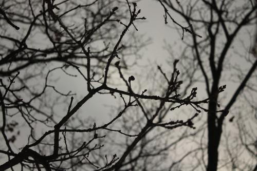 tree-2427769_1920