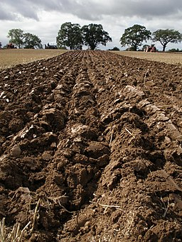 Furrows,_ploughed_field